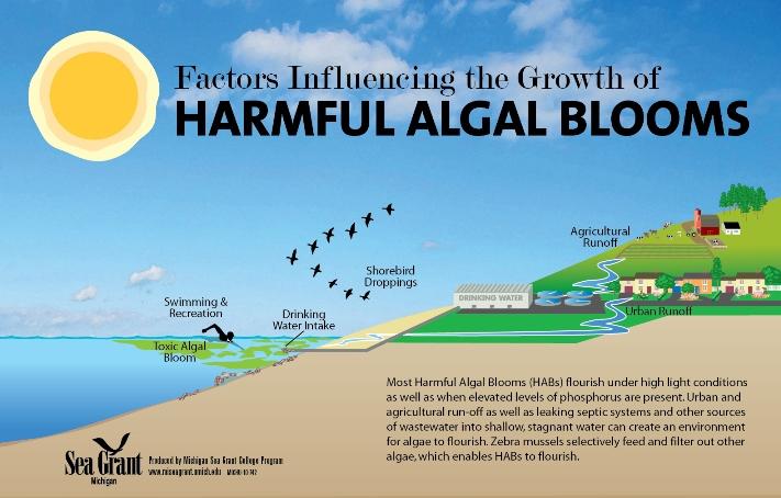 Ảnh hưởng của hiện tượng tảo nở hoa