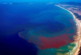 Thủy triều đỏ là gì? Nguyên nhân gây ra thủy triều đỏ?