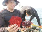 Thảm họa đáy biển sau vụ cá chết